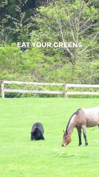EAT YOUR GREENS CLAYOQUOT LIFE