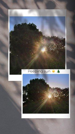 Peeping sun ☀️ 🌲
