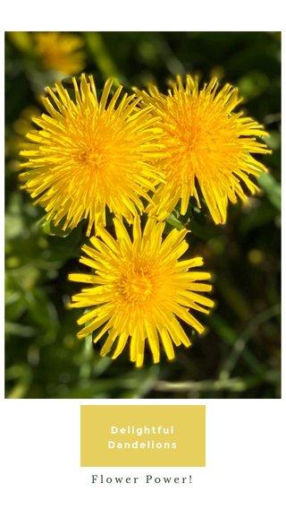 Delightful Dandelions Flower Power!