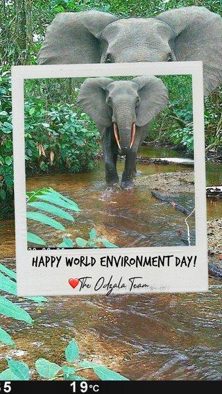 Happy World Environment Day! ❤️The Odzala Team