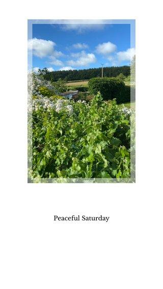 Peaceful Saturday
