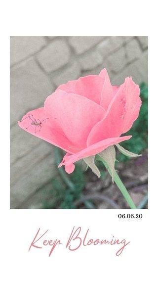 Keep Blooming 06.06.20