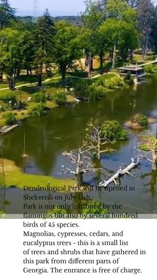 Dendrological Park will be opened in Shekvetili on July 15th. Park is not only inhabited by the flamingos but also by several hundred birds of 45 species. Magnolias, cypresses, cedars, and eucalyptus trees - this is a small list oftrees and shrubsthat have gathered in this park from different parts of Georgia. The entrance is free of charge.