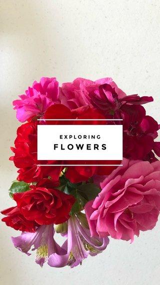 FLOWERS EXPLORING