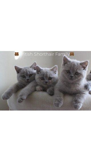 🐻British Shorthair Family🐻