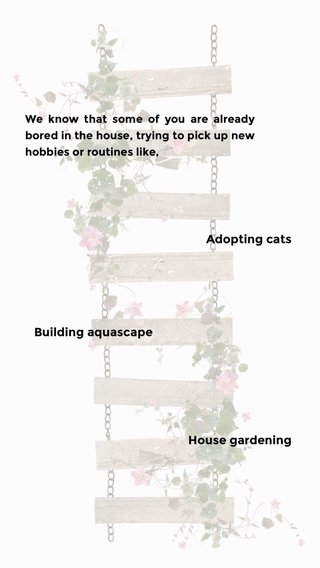 Adopting cats House gardening Building aquascape We know that some of you are already bored in the house, trying to pick up new hobbies or routines like,