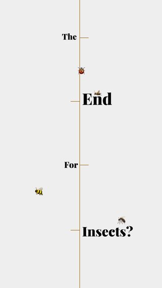 End Insects? For 🐞 The 🦟 🦗 🐝