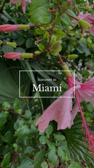 Miami Summer in