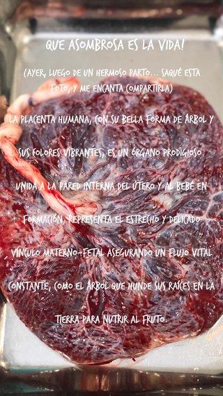Que asombrosa es la vida! La placenta humana, con su bella forma de árbol y sus colores vibrantes, es un órgano prodigioso. Unida a la pared interna del útero y al bebé en formación, representa el estrecho y delicado vínculo materno-fetal asegurando un flujo vital constante, como el árbol que hunde sus raíces en la tierra para nutrir al fruto. (Ayer, luego de un hermoso parto... saqué esta foto, y me encanta compartirla)