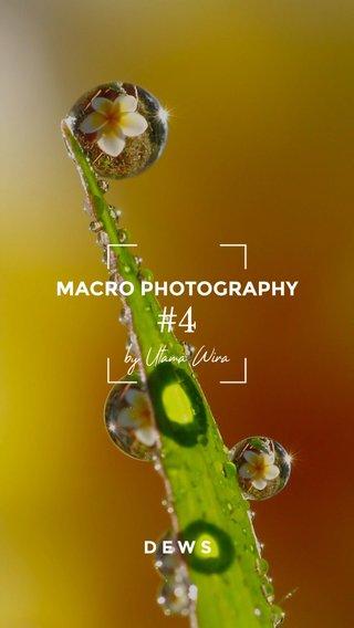 #4 MACRO PHOTOGRAPHY DEWS by Utama Wira