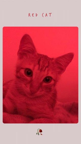 🥀 RED CAT