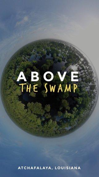 ABOVE The swamp ATCHAFALAYA, LOUISIANA
