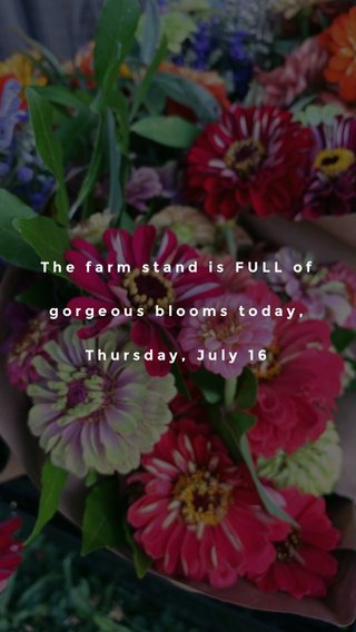 The farm stand is FULL of gorgeous blooms today, Thursday, July 16