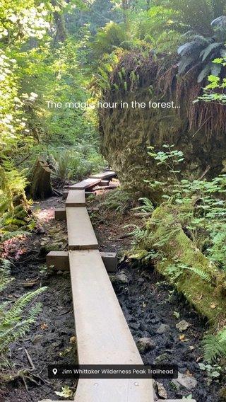 The magic hour in the forest... #shareyourworld #stellerstories #nature #stellerinmotion