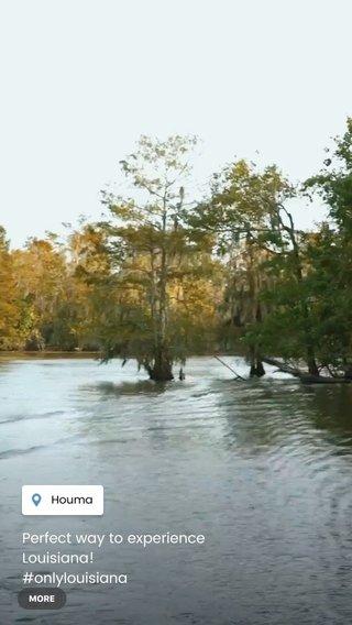 Perfect way to experience Louisiana! #onlylouisiana #lovewhereyoulivelouisiana