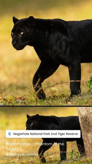 Black Panther - Phantom of the forest! #shareyourworld