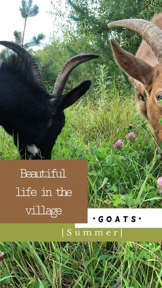 Beautiful life in the village  Summer  •Goats•