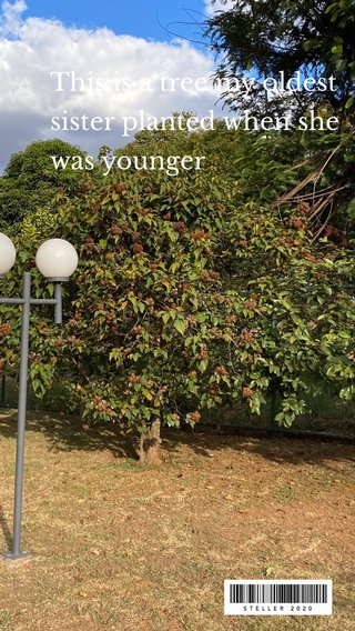 This is a tree my oldest sister planted when she was younger