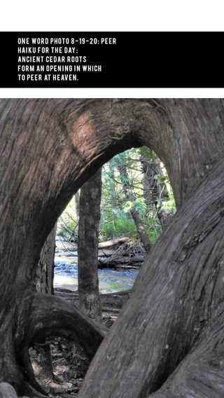 One Word Photo 8-19-20: Peer Haiku for the Day: Ancient cedar roots form an opening in which to peer at heaven.