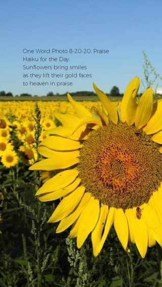 One Word Photo 8-20-20: Praise Haiku for the Day: Sunflowers bring smiles as they lift their gold faces to heaven in praise.