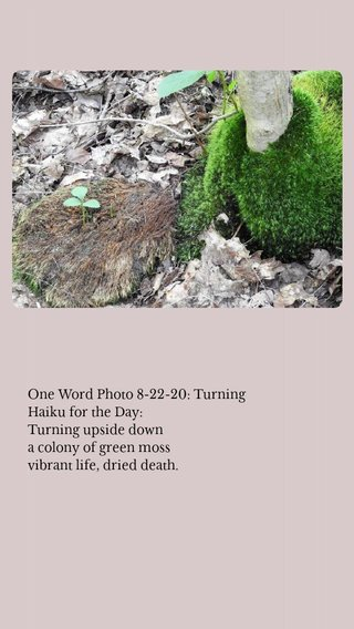 One Word Photo 8-22-20: Turning Haiku for the Day: Turning upside down a colony of green moss vibrant life, dried death.