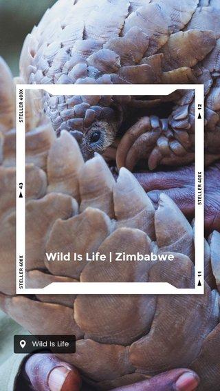 Wild Is Life | Zimbabwe