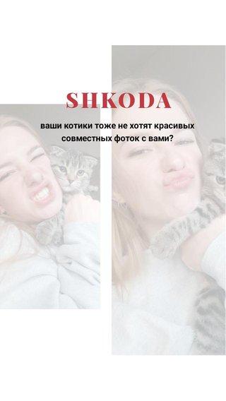 SHKODA ваши котики тоже не хотят красивых совместных фоток с вами?
