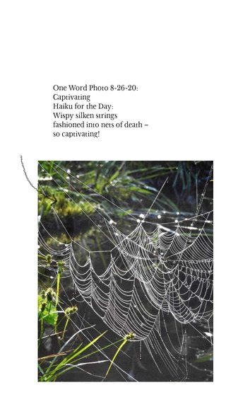 One Word Photo 8-26-20: Captivating Haiku for the Day: Wispy silken strings fashioned into nets of death – so captivating!