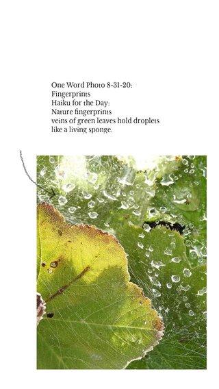 One Word Photo 8-31-20: Fingerprints Haiku for the Day: Nature fingerprints veins of green leaves hold droplets like a living sponge.