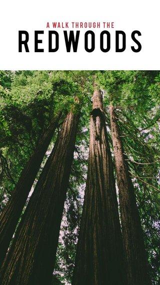Redwoods A walk through the