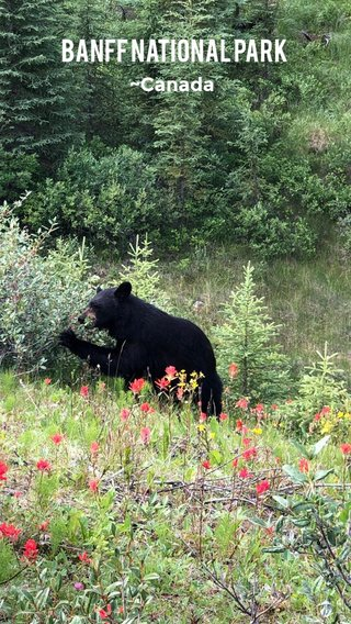 Banff National Park ~Canada