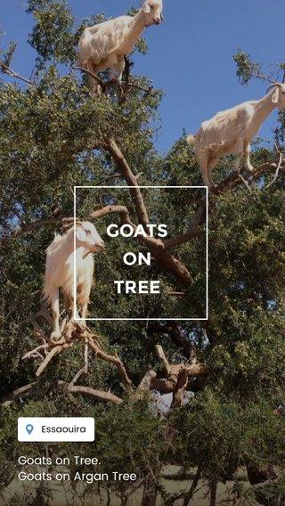 GOATS ON TREE Goats on Tree. Goats on Argan Tree