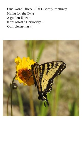 One Word Photo 9-1-20: Complimentary Haiku for the Day: A golden flower leans toward a butterfly – Complementary