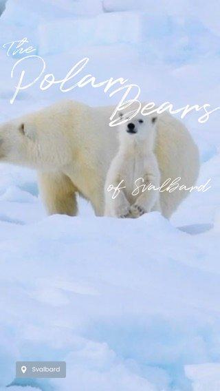 Polar Bears The of Svalbard