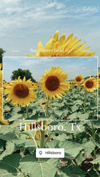 Hillsboro, Tx Sunflower field in