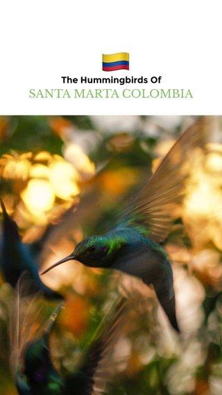 🇨🇴 SANTA MARTA COLOMBIA The Hummingbirds Of