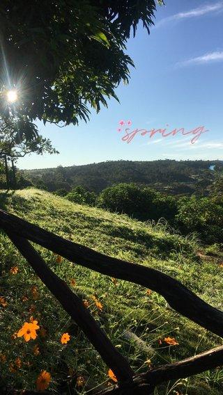 spring 🌸 🌸 🌸