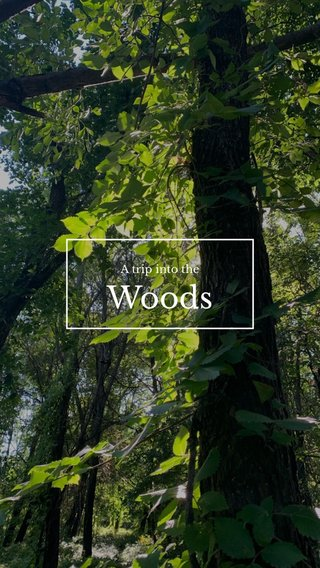 Woods A trip into the