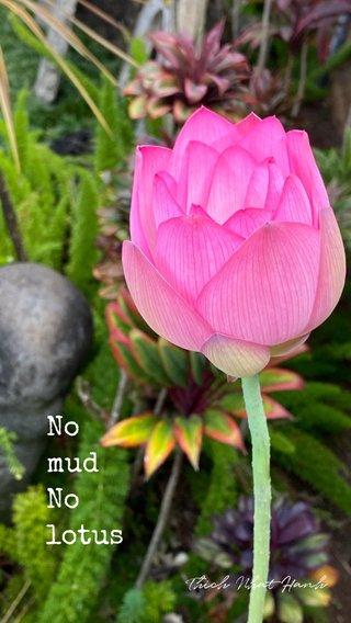 No mud No lotus Thich Nhat Hanh