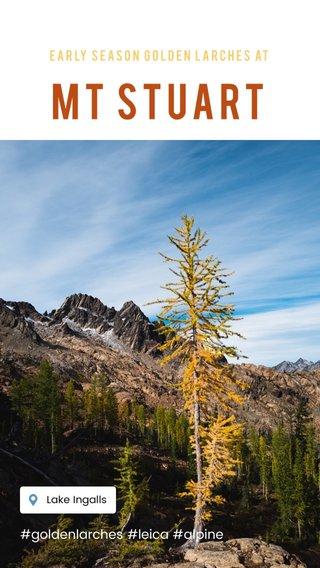 Mt Stuart #goldenlarches #leica #alpine Early season golden Larches at