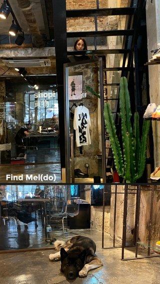 Find Mel(do)