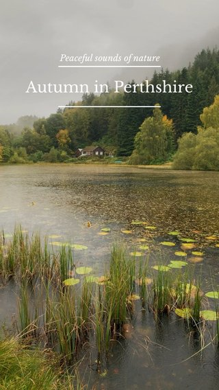 Autumn in Perthshire Peaceful sounds of nature