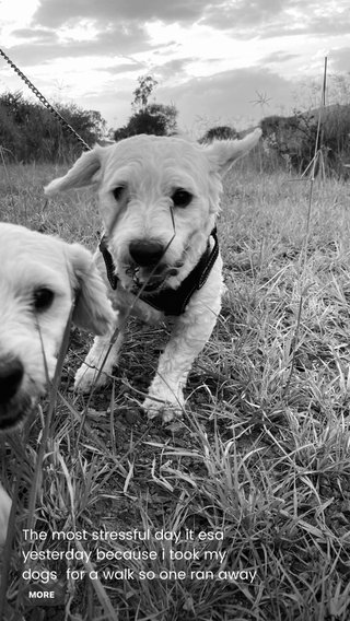 The most stressful day it esa yesterday because i took my dogs for a walk so one ran away from me and couldn't reach it, scares me too hard as we were on a hill and thought I could lose it and never find it.