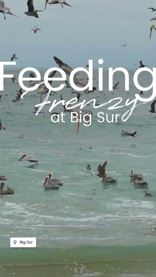 Feeding Frenzy at Big Sur