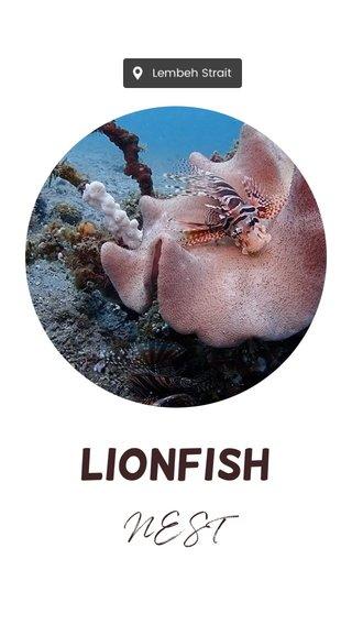 Lionfish NEST