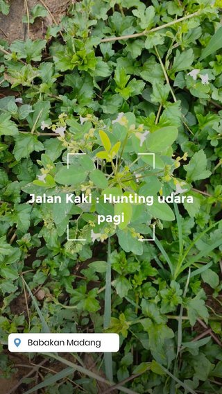 Jalan Kaki : Hunting udara pagi