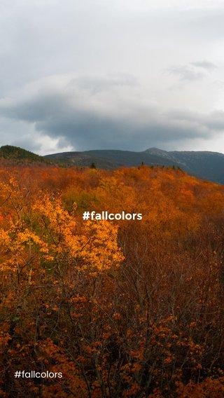 #fallcolors #fallcolors