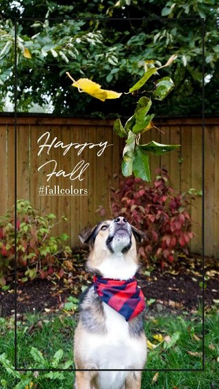 Happy Fall #fallcolors