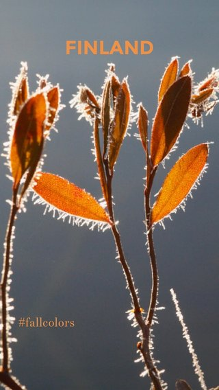 FINLAND #fallcolors