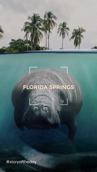 FLORIDA SPRINGS #storyoftheday